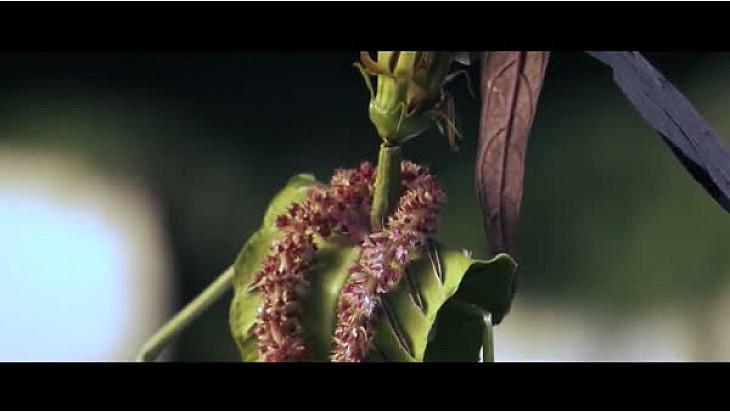Les HERBETTES : François MAURISSE le Couturier Végétale vous présente  'Les nouvelles d'automne d'un Exflorateur'  #Herbettes @TvLocale-fr